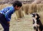 Como Acariciar um Cão