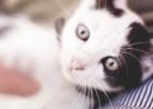 Como Fazer Festas a um Gato