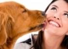 Como Melhorar o Hálito do Cão
