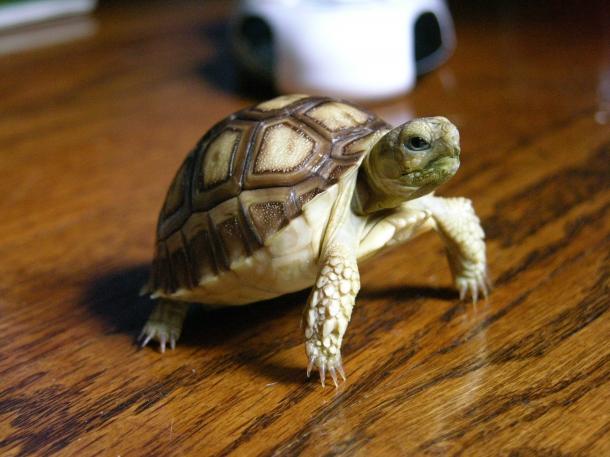 Как сделать своими руками островок для черепахи